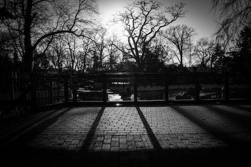 Ilmainen kuvapankkikuva tunnisteilla aurinkoinen, mustavalkoinen, puut, varjot