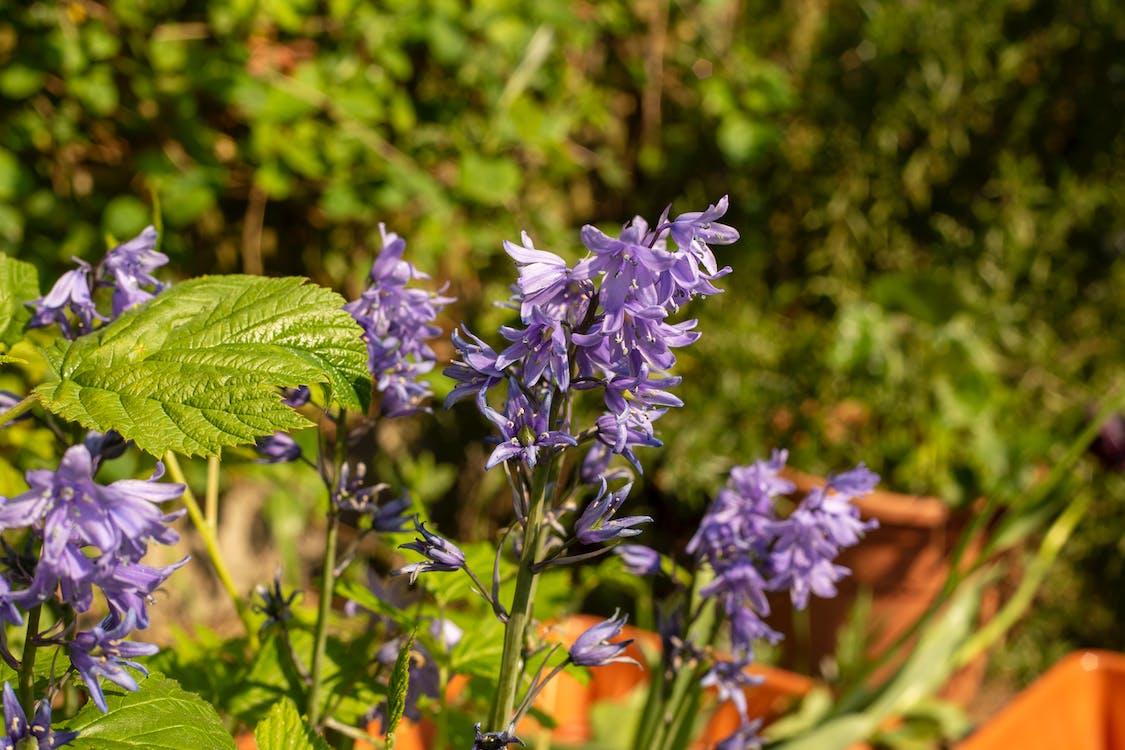 修剪花草, 园林花卉, 園藝 的 免费素材图片