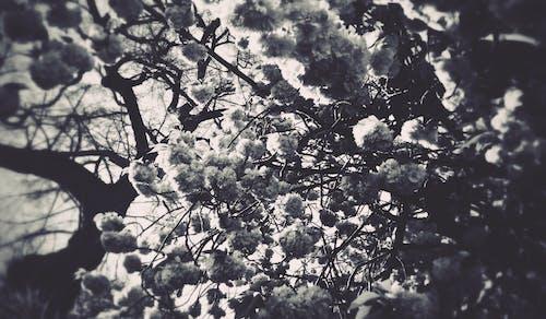 ağaç, ağaçlar, bahar, Bahçe içeren Ücretsiz stok fotoğraf