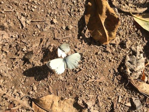 Gratis stockfoto met vlinder
