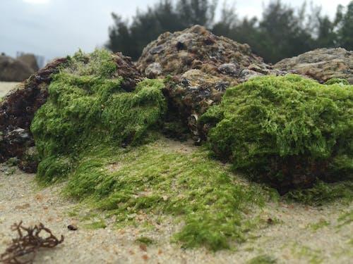 Gratis stockfoto met mos, rock