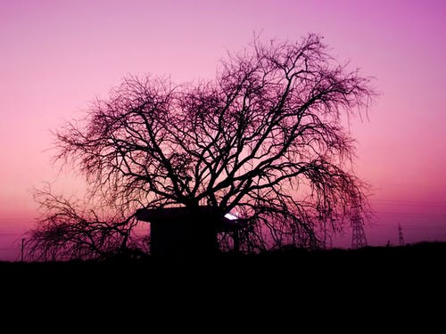 Fotos de stock gratuitas de árbol, noche, noche evocadora, tarde