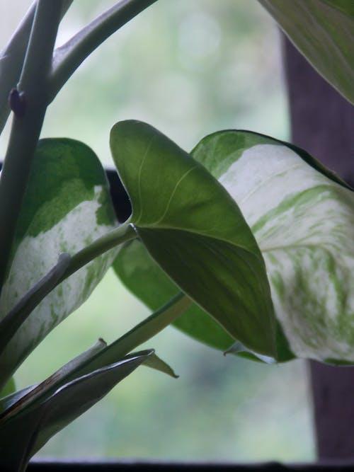 Fotos de stock gratuitas de hojas, planta, planta de dinero