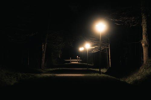 Kostenloses Stock Foto zu abend, allein, bäume, brücke