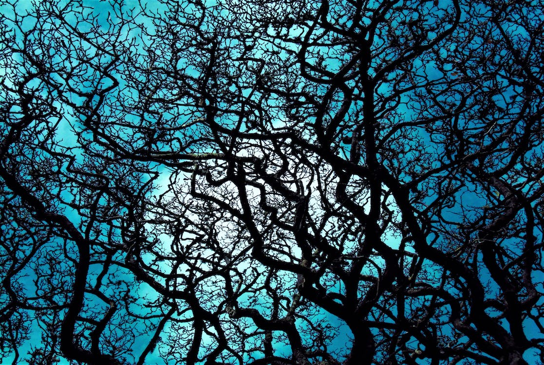 Free stock photo of black, blue, branches