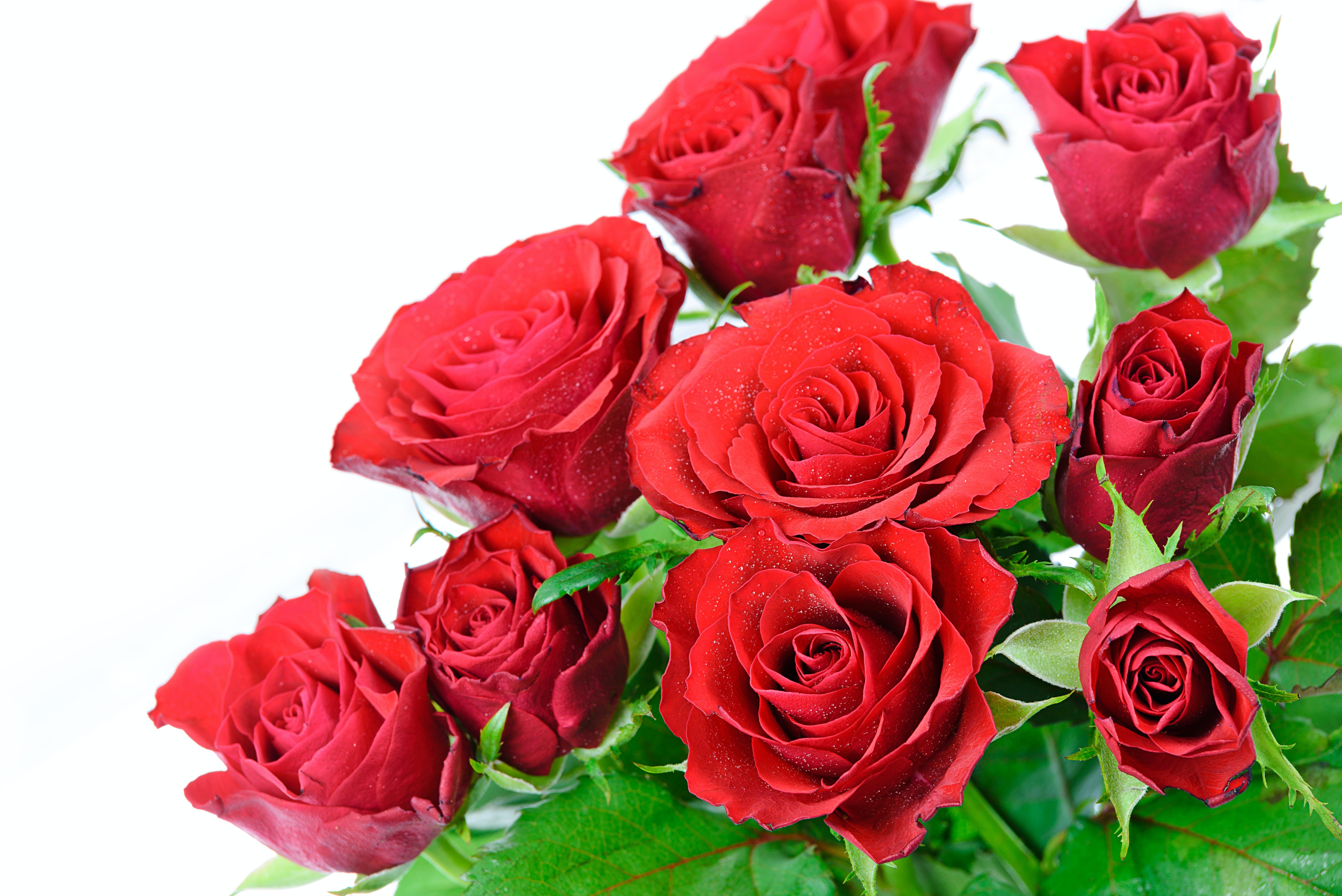 of amazing, anniversary, arrangement, beautiful