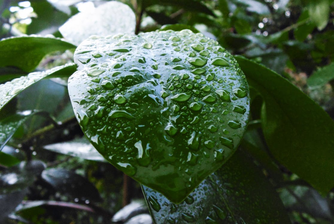 Free stock photo of clean, dewdrop, droplet