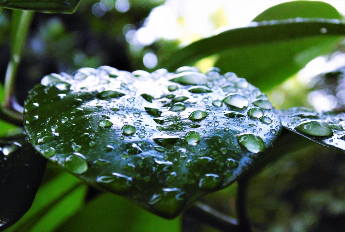 Free stock photo of dewdrops, droplet, droplets
