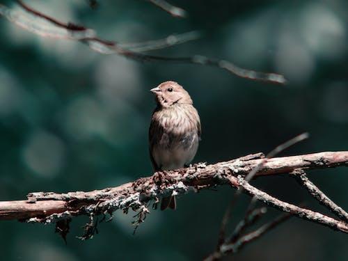 Cute small grey bunting bird on tree branch