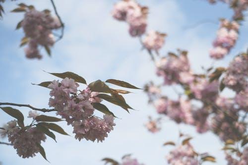 Gratis stockfoto met bloem, fleur de printemps, fotografie, fujifilm