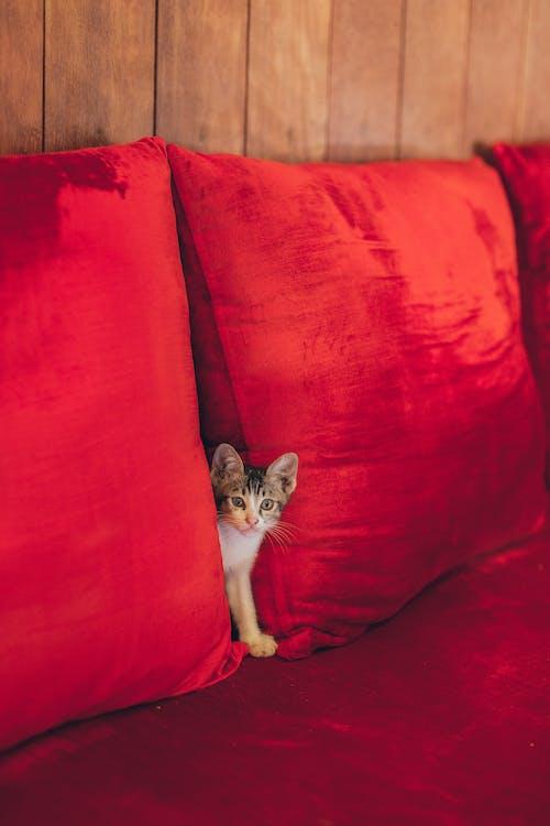 Základová fotografie zdarma na téma apartmán, červená, chmýří