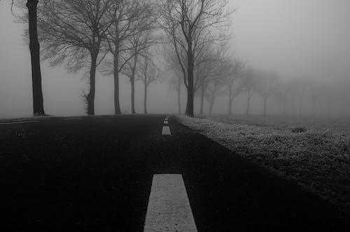 Základová fotografie zdarma na téma černobílý, křivka, mlha, opar