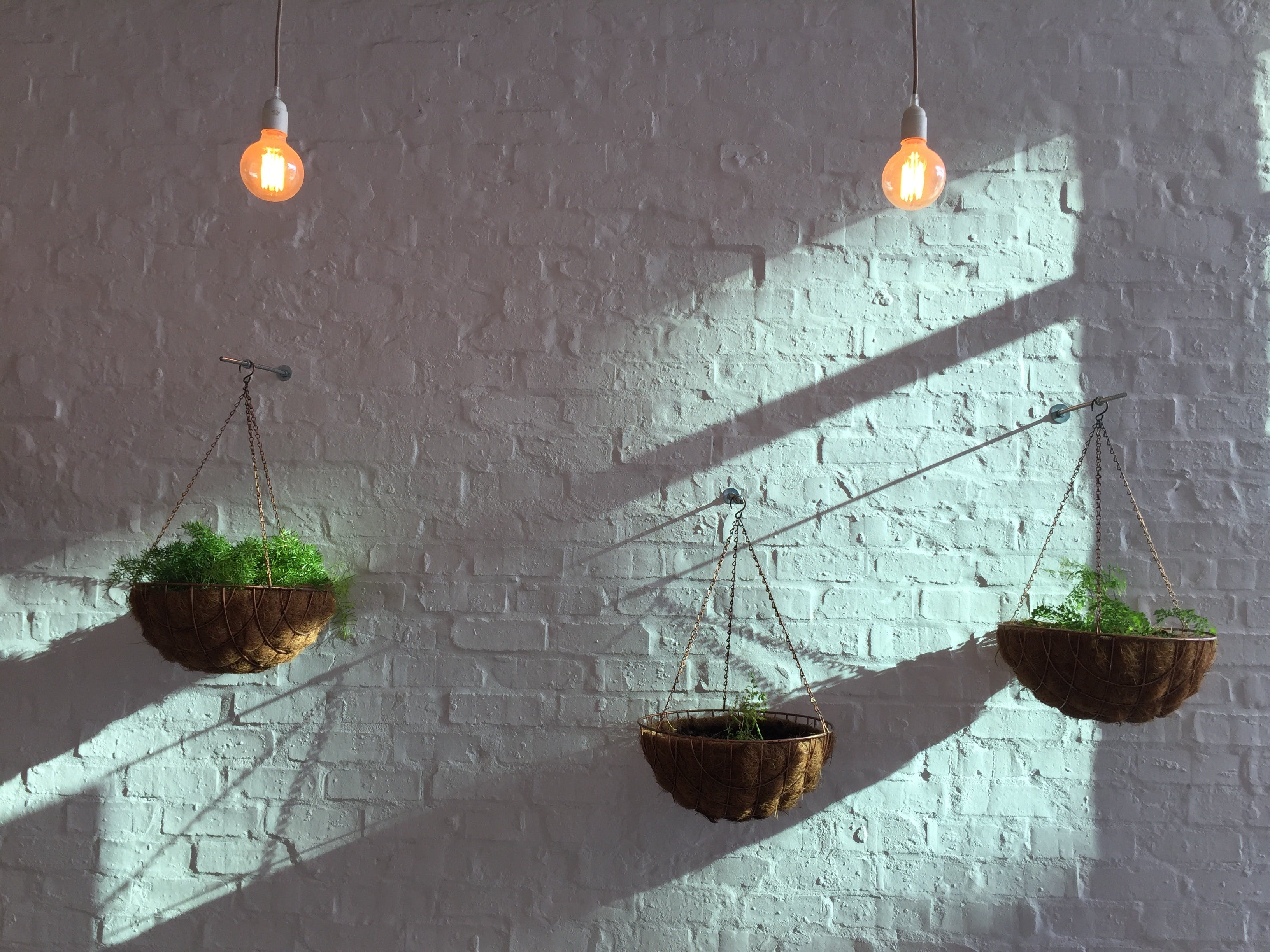 Free stock photo of lights, wall, morning, plants