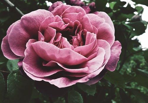 armağan, Aşk, Bahçe, bahçe bakımı içeren Ücretsiz stok fotoğraf