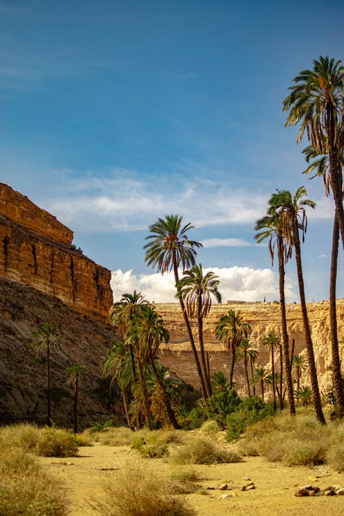 Green Palm Tree Near Brown Rock Formation
