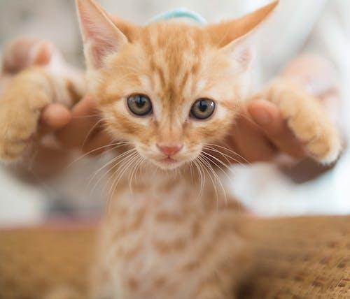 Fotobanka sbezplatnými fotkami na tému bábätko, mačky, malý, roztomilý