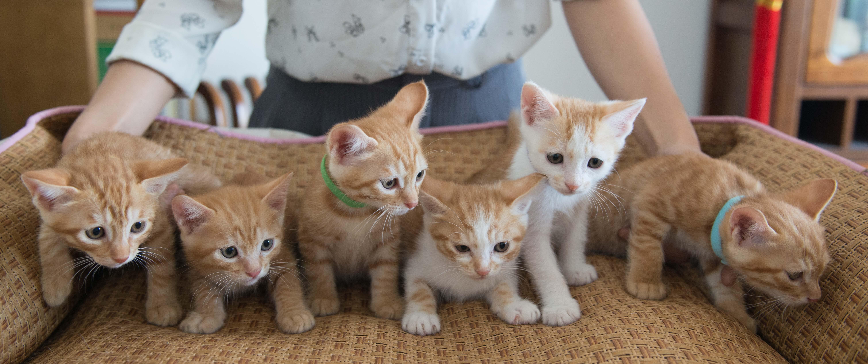 Free stock photo of baby, cats, cute, family
