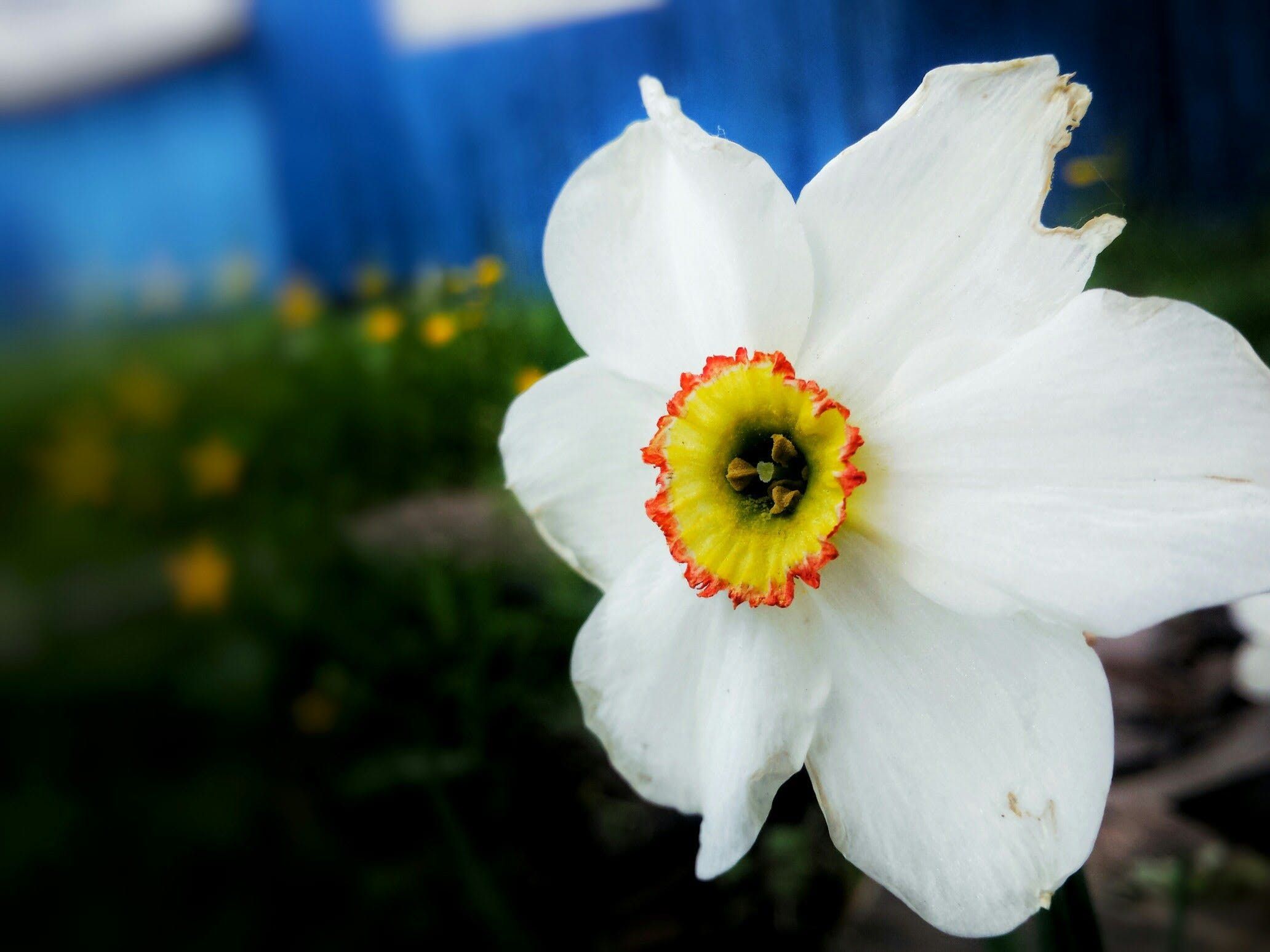 Free stock photo of bokeh, flower, focus, garden