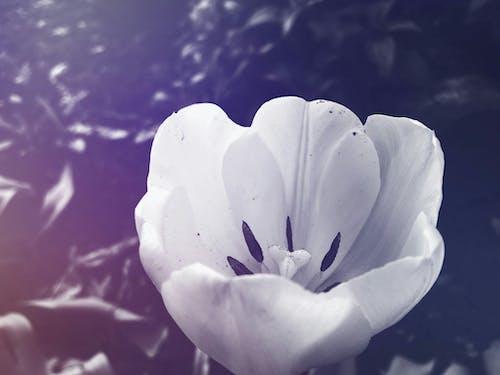 Fotobanka sbezplatnými fotkami na tému biela, deň, kvety, leto