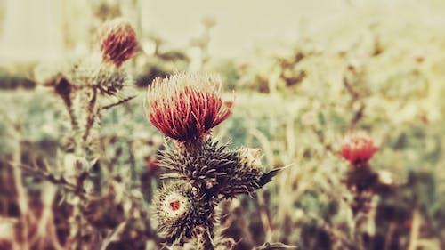 Fotobanka sbezplatnými fotkami na tému hracie pole, rastlina, zelená