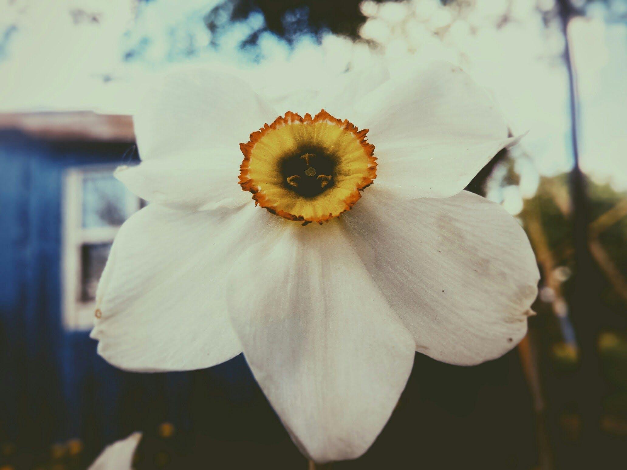 Δωρεάν στοκ φωτογραφιών με βινιέτα, εστιάζω, καλοκαίρι, κήπος