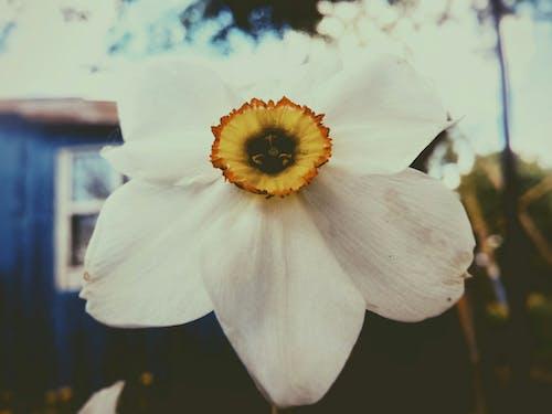 Fotobanka sbezplatnými fotkami na tému biela, diaľničná nálepka, kvet, leto