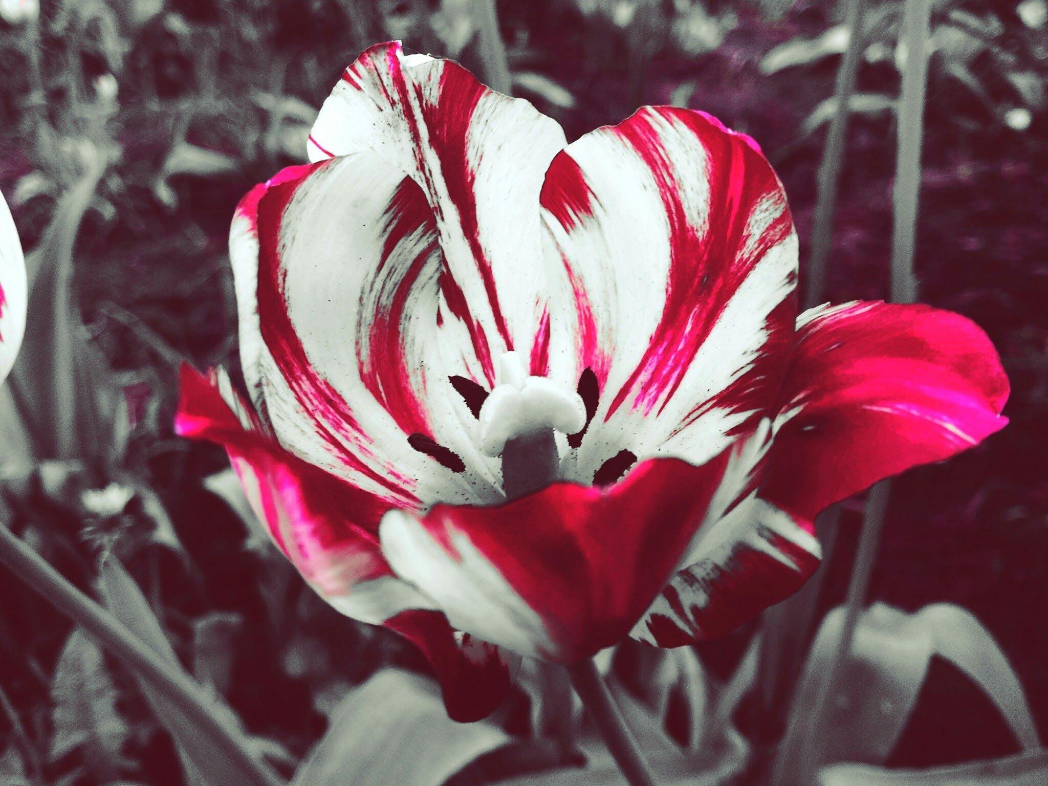 Δωρεάν στοκ φωτογραφιών με bicolour, ημέρα, καλοκαίρι, λευκός