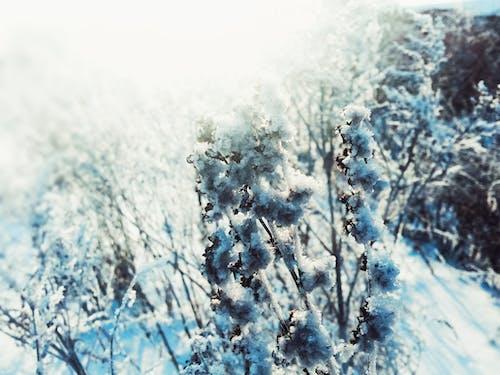 Fotobanka sbezplatnými fotkami na tému deň, slnko, záveje, zima