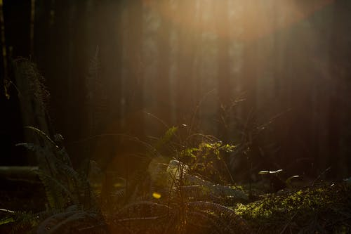 Free stock photo of ferns, forest, forest sunset