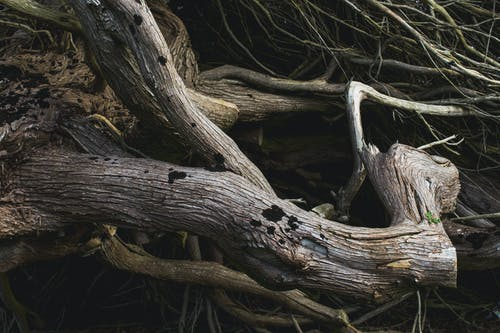 Free stock photo of driftwood, roots, wood