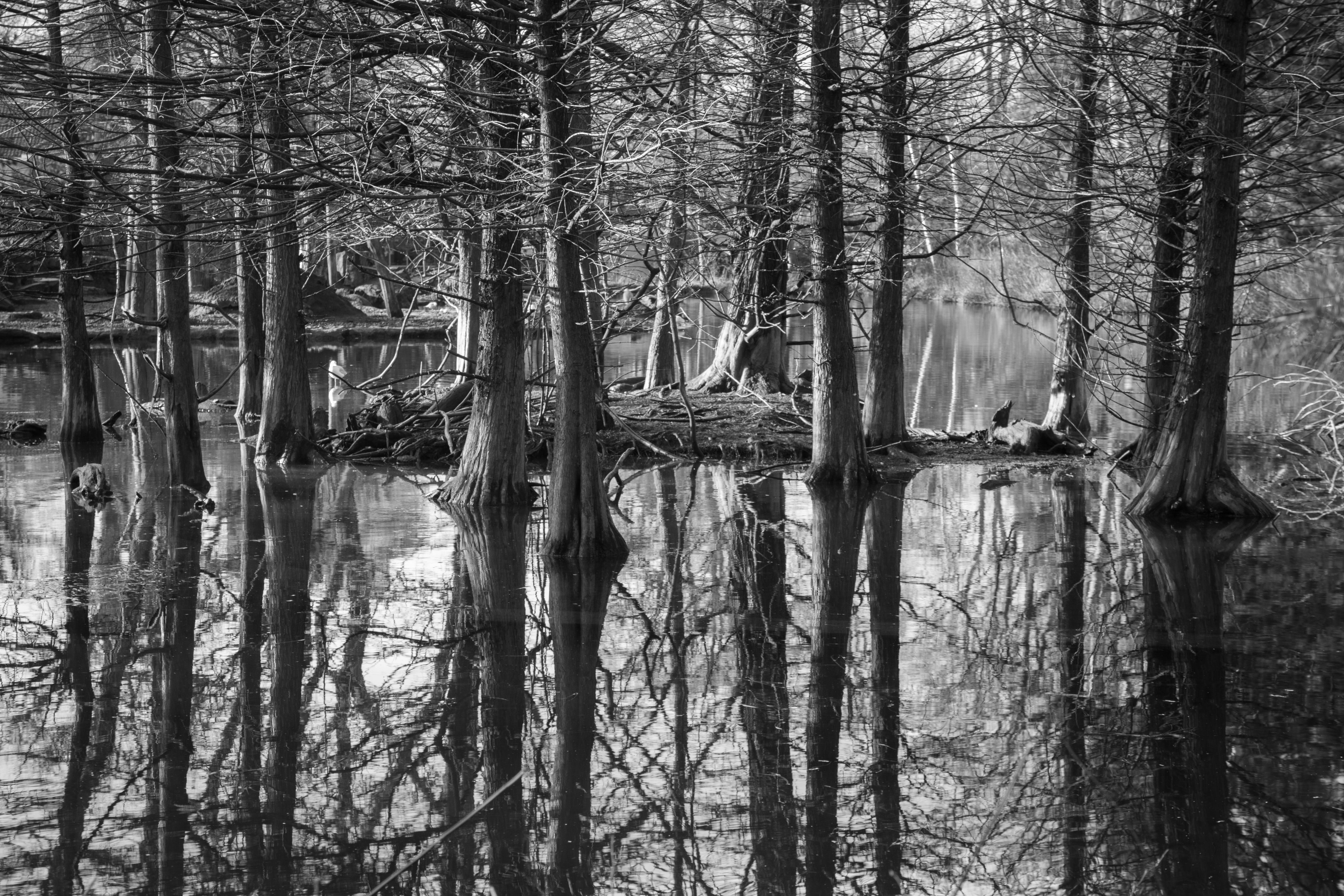 Gray Scale Photography of Trees Surrounded by Body of Water