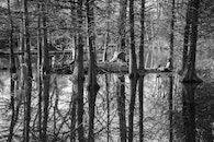 black-and-white, forest, trees