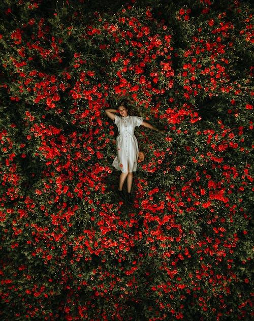 Woman in White Dress Lying on Red Flower Garden