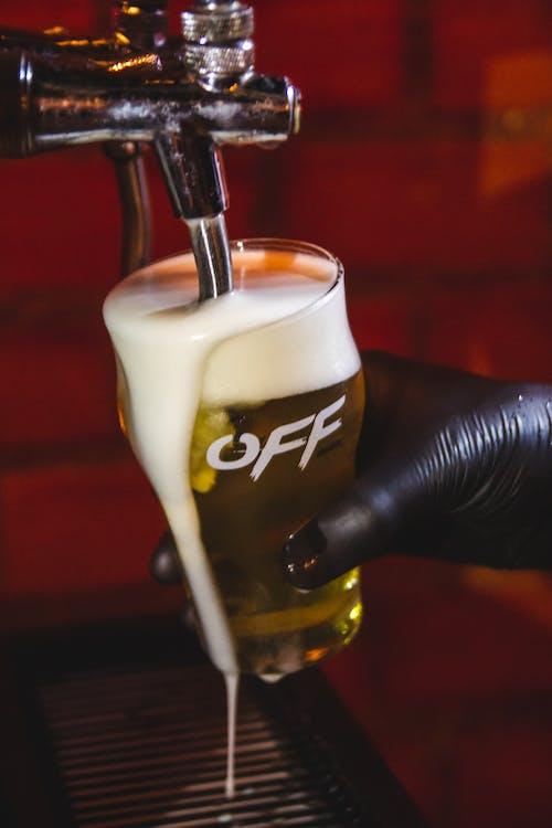 Free stock photo of beer, cerveja, cerveza, chopp
