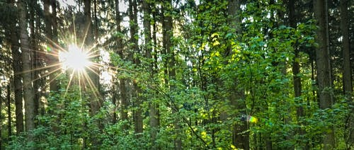 Gratis lagerfoto af bäume wald, goldene sonne