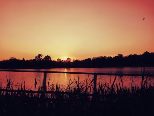 Fotos de stock gratuitas de agua, amanecer, arboles, césped
