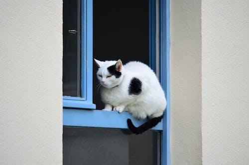 Photos gratuites de animal de compagnie, animalier, bavarder, chat noir et blanc