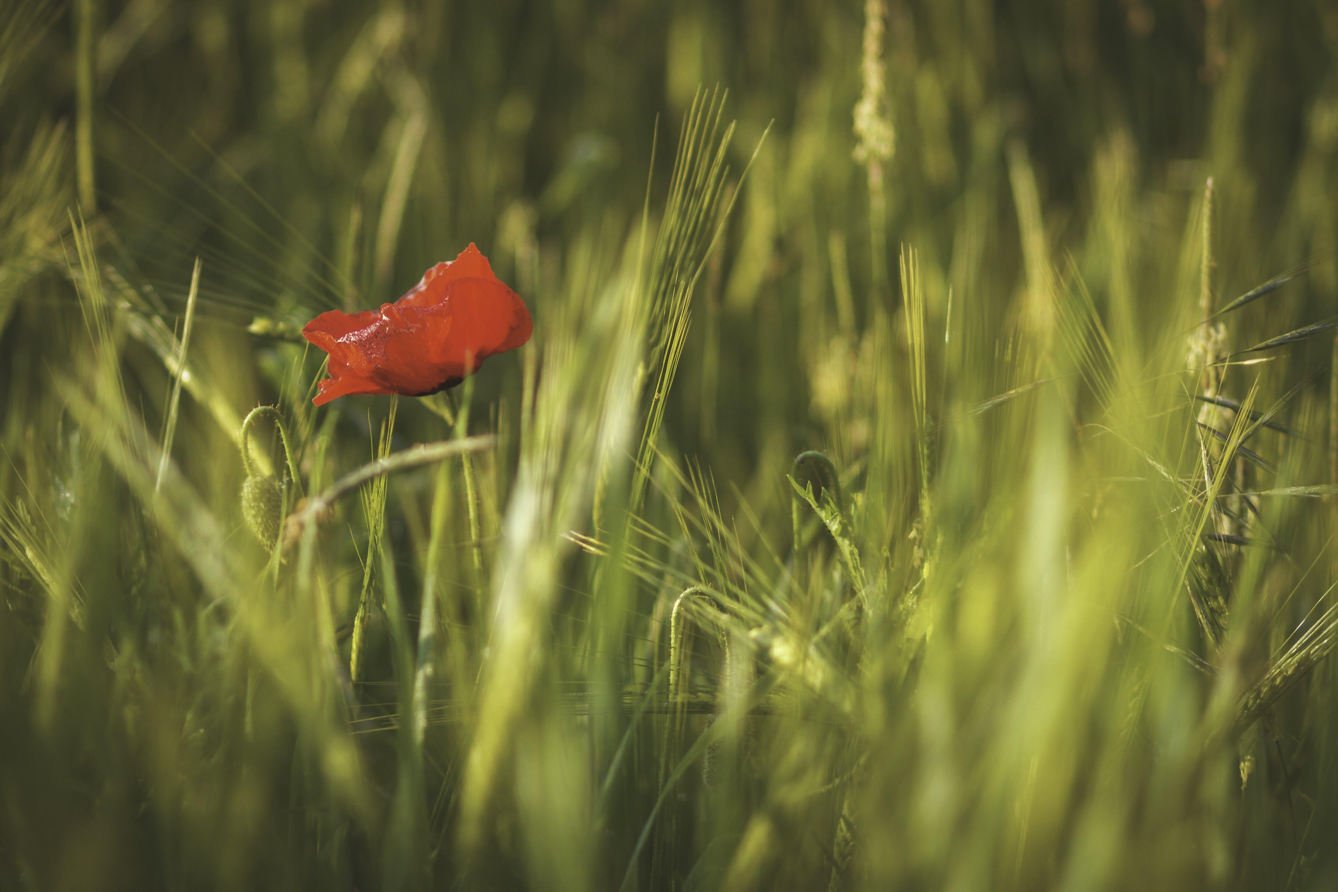 depth of field, field, mothernature