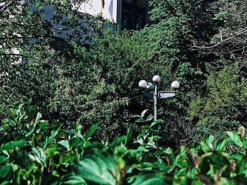 Lamp post between lush greenery in daylight