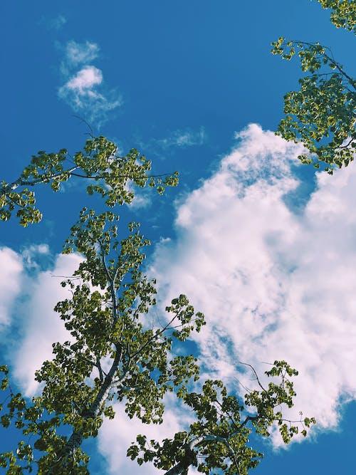 エコロジー, オーガニック, カラフル, シーンの無料の写真素材
