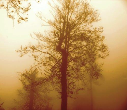 Free stock photo of ağaç, sis, sonbahar