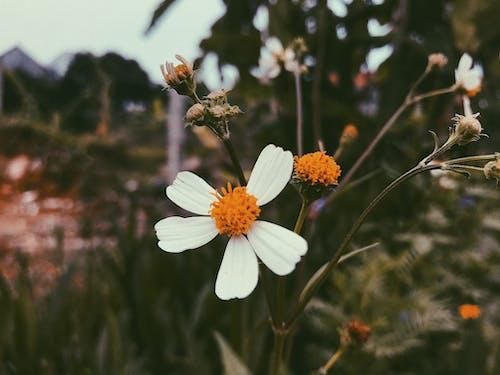 Free stock photo of beautiful flower, vintage