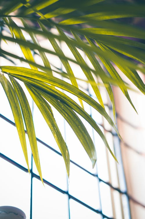 Leaves of Green Palm Plant