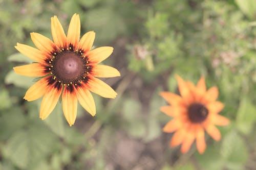 Kostenloses Stock Foto zu flores