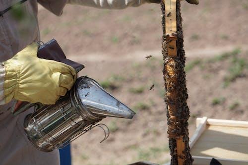 Close-Up Photo of Beekeeper Using Bee Smoker