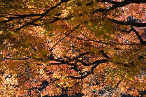 Free stock photo of japan, tokyo