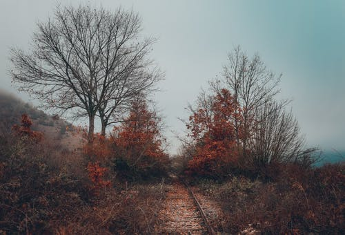 An Old Railroad Track in between Trees during Autumn