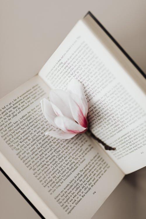 คลังภาพถ่ายฟรี ของ ดอกไม้สีขาว, นวนิยาย, บทกวี