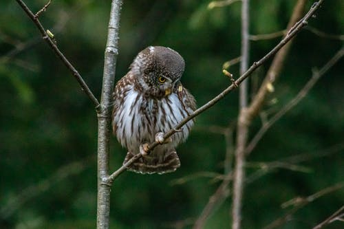 Close-Up Shot of an Owl Perched on Tree Branch