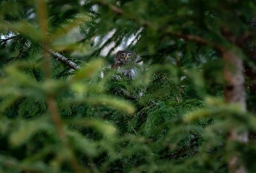 Low-Angle Shot of an Owl on Tree Branch